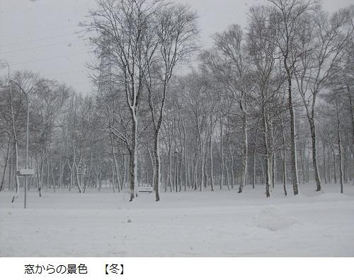 防風林 ふゆ